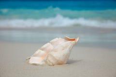 Shell on the beach. Ocean surf. Similan islands, Thailand Stock Photography