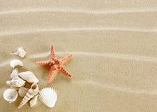 Shell on a beach Royalty Free Stock Photos