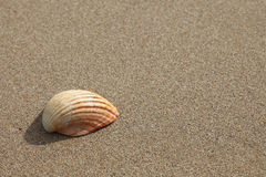 Shell on a beach Royalty Free Stock Photo