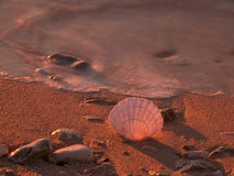Shell on the beach. Shell on the send beach in the golden sunset Royalty Free Stock Photography