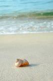 Shell on Beach Royalty Free Stock Photo
