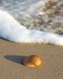 Shell on beach. Beautiful shell on beach with wave Stock Images