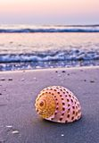Shell on beach. In morning light royalty free stock photo