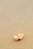Shell on a beach Royalty Free Stock Image