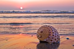 Shell on beach. Single spiral shellfish on beach in morning light Royalty Free Stock Image