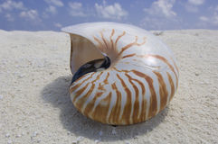 Shell on the beach. Nautilus shell on the sandy tropical beach royalty free stock images