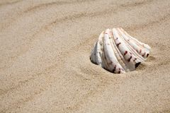Shell on beach. Beautiful shell on sand beach Royalty Free Stock Images