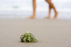 Shell on beach Stock Photos