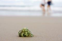 Shell on beach Stock Photo