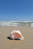 Shell on beach. Shell on an exotic beach. summer vacation theme Royalty Free Stock Image