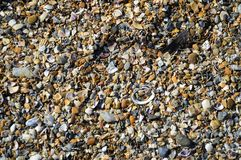Shell beach background. Small summer royalty free stock photography