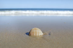 Shell at a beach Stock Photography