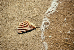 Shell in beach. Broken shell in sand beach with a sea wave Stock Photography