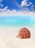 Shell on the beach. Brown sand Royalty Free Stock Image