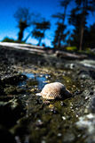 Shell on beach Stock Photography