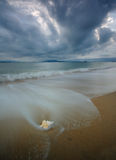 Shell on a beach. Beach with conch shell under sky Stock Photography