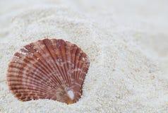 Shell on the beach Stock Photos