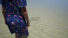 Shell Beach Coral Coast stock videobeelden