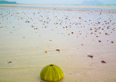 Shell on the beach. The fisherman villageshell on the beach Stock Images