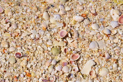 Shell Beach, Florida royalty free stock photography