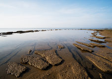 Shell Beach fossile gastéropode, années de 75 millions Photos libres de droits