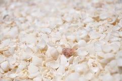Shell Beach hajfjärd, västra Australien Royaltyfria Foton