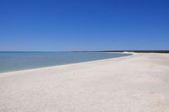 Shell Beach hajfjärd, västra Australien Royaltyfri Fotografi