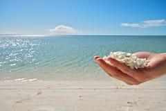 Shell Beach - hajfjärdregion Fotografering för Bildbyråer