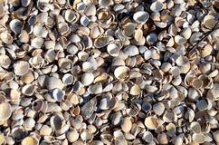 Shell beach, Kippford Royalty Free Stock Photos