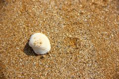 Shell On Beach Royalty Free Stock Photography