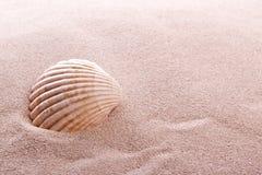 Shell  on a beach. Shell lying in sand on a beach Royalty Free Stock Photos