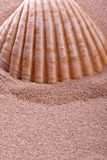 Shell  on a beach. Shell lying in sand on a beach Royalty Free Stock Photography