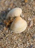 Shell on the beach, macro Stock Photography