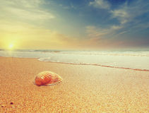 Shell on a Beach of Mediterranian sea at sunrise, Greece Stock Images