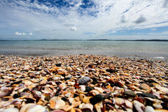 Shell beach New Zealand Royalty Free Stock Images