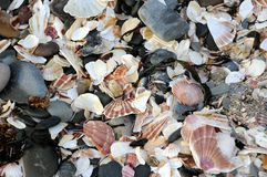 Shell beach at Peel, Isle of Man Stock Images