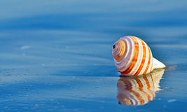 Shell on a beach with reflection Stock Image