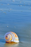 Shell on a beach Royalty Free Stock Photos