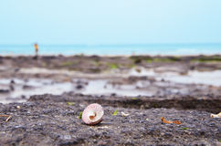 A shell on the beach Royalty Free Stock Images