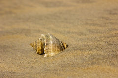 Shell on beach sand. Close up to Stock Photography