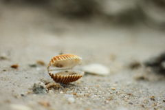 Shell. On the beach, on the sand Stock Image