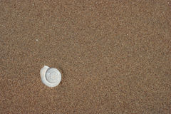Shell in the beach sand Royalty Free Stock Photos