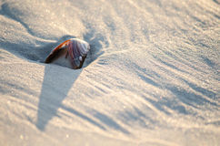 Shell in beach sand Stock Image