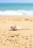 Shell on beach sand Royalty Free Stock Image