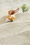 Shell with beach Royalty Free Stock Image