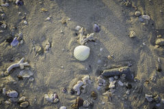 Shell on the beach. Stock Photo