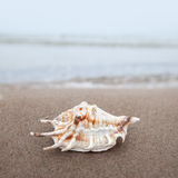 Shell on the beach Stock Photos