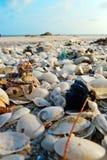 Shell beach. Beach shell sea sand marine Stock Photos