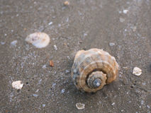 Shell on beach 1 Royalty Free Stock Images