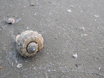 Shell on beach 2 Royalty Free Stock Photography
